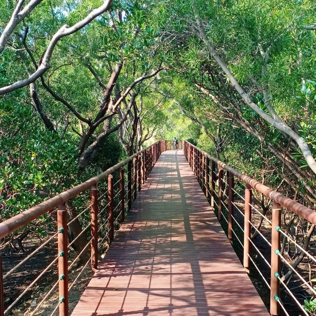 紅樹林生態步道,紅樹林站,淡水景點,淡水,淡水一日遊2020