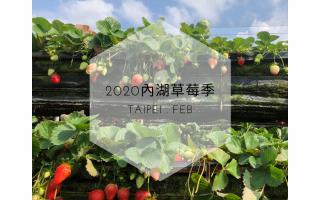 Green Minimalist Plant Social Media Post (2)