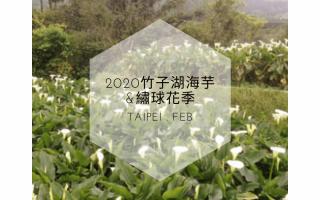 陽明山海芋季,海芋季,陽明山,台北,台北景點,陽明山花季