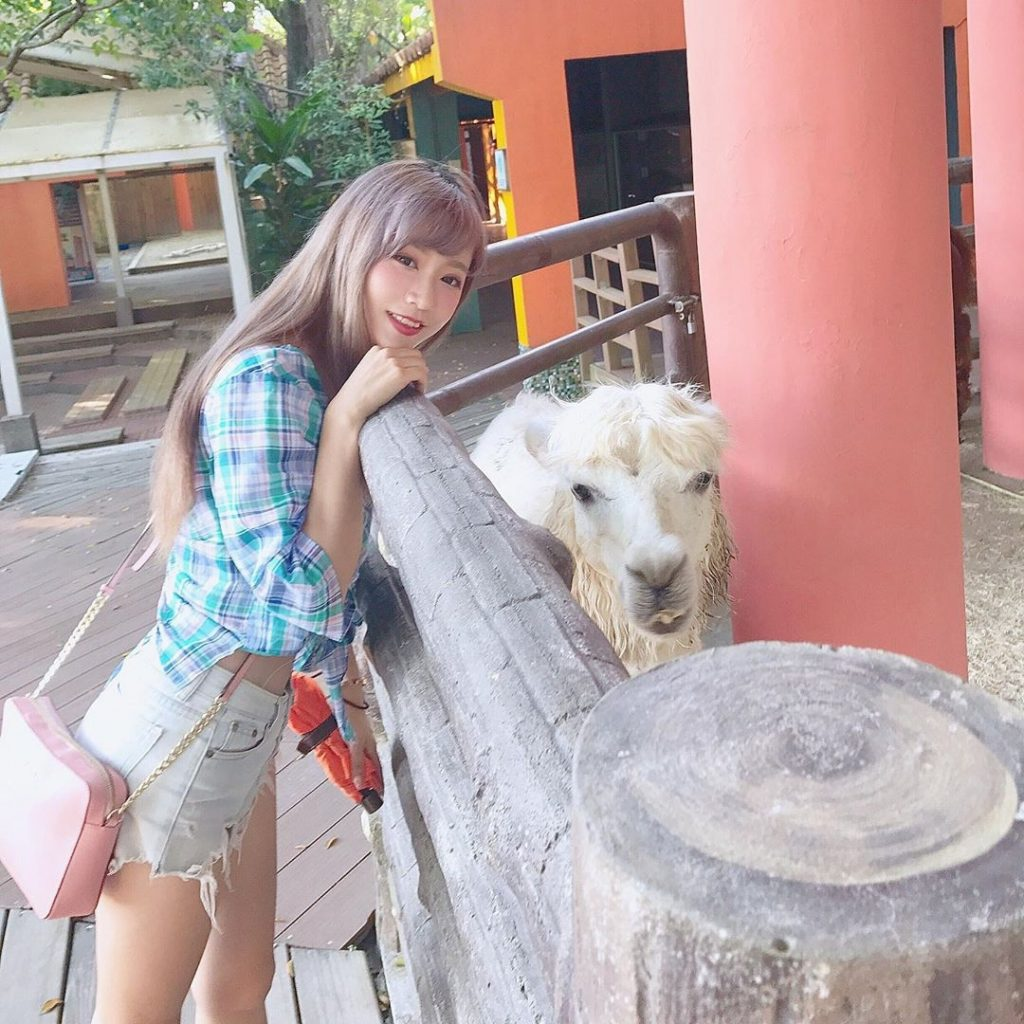 動物園,台北動物園,台北市立動物園,羊駝