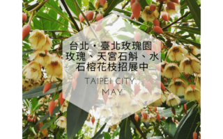新聞-台北玫瑰園封面